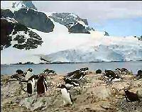 antarctica cruise Cuverville Island
