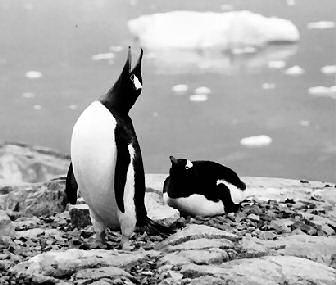 penguin cruises antarctica