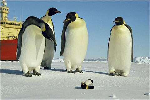 Icebreaker penguin doll cartoon