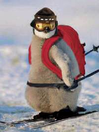 Skiing penguin cartoon